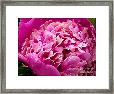 Blooming Wonder Framed Print