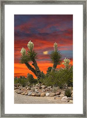 Full Blooming Yucca Framed Print
