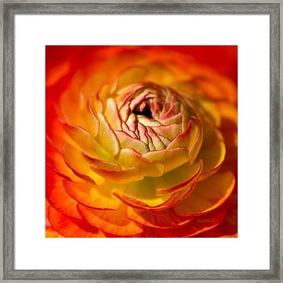 Bloomingdale Tangerine Buttercup Framed Print