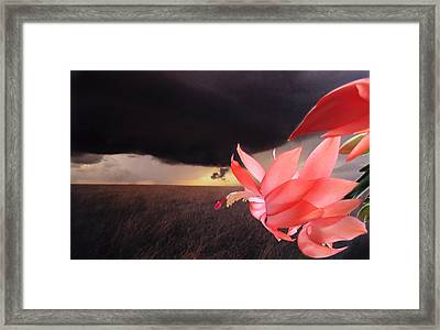 Framed Print featuring the photograph Blooms Against Tornado by Katie Wing Vigil