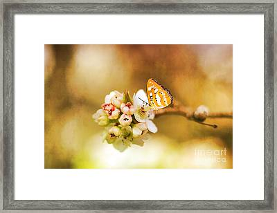 Blooms And Butterflies Framed Print by Darren Fisher