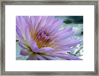 Bloom's Blush Framed Print