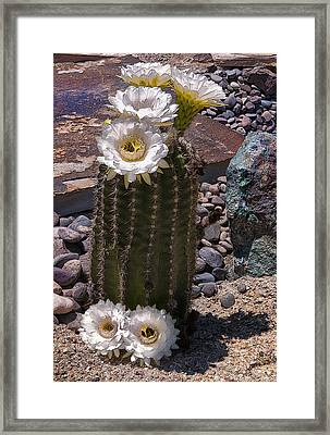 Blooms Everywhere Framed Print