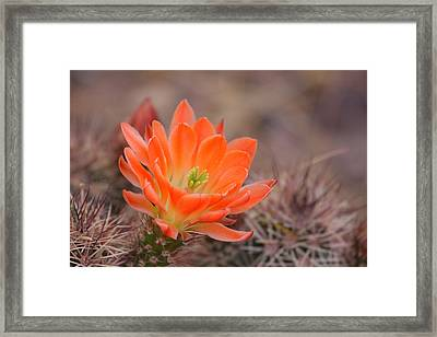 Framed Print featuring the photograph Blooms In Orange by Ruth Jolly