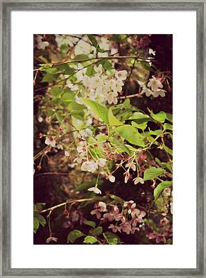 Blooms In The Branches Framed Print by Cathie Tyler