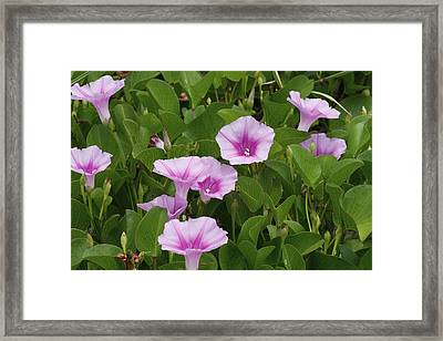 Blooms Framed Print by Kimberly Oegerle