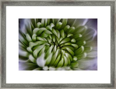 Blooms Of Green Framed Print by Mkaz Photography