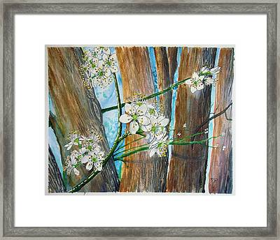 Blooms Of The Cleaveland Pear Framed Print
