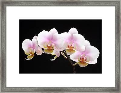Blooms On Black Framed Print