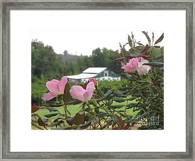 Blooms With The Barn Framed Print by Gayle Melges