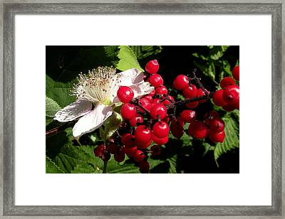 Blossom And Berries Framed Print