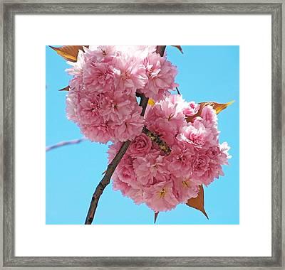 Blossom Bouquet Framed Print
