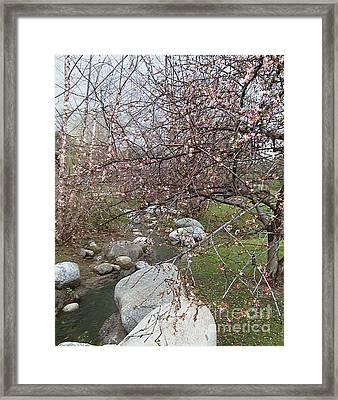 Blossom Brook Framed Print