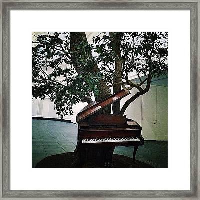 'blossom' By Sanford Biggers Framed Print