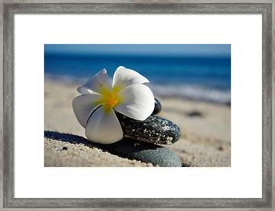Blossom Framed Print by Camilla Fuchs