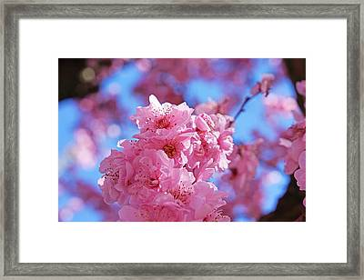 Blossom Flowers Trees Art Prints Framed Print by Baslee Troutman