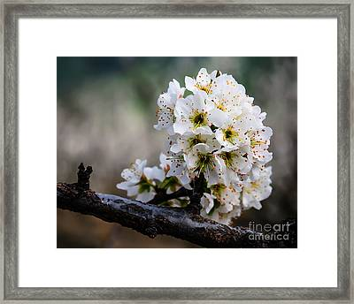 Blossom Gathering Framed Print by Terry Garvin