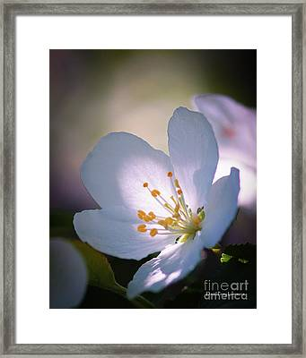 Blossom In The Sun Framed Print