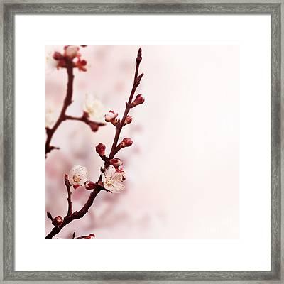 Blossom Framed Print by Jelena Jovanovic