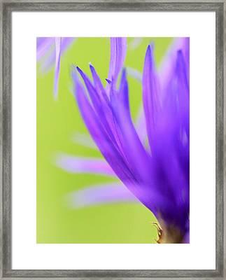 Blossom Macro Framed Print by Kim Thompson