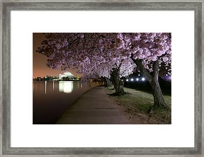 Blossom Night Fever Framed Print by Bernard Chen