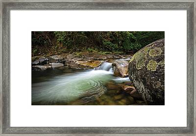 Blossom Of The Gloom Framed Print by Mark Lucey