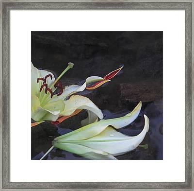 Blossom Rain 16 Framed Print by Georg Kickinger