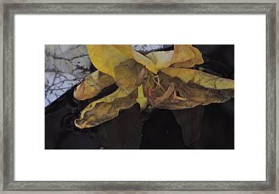Blossom Rain 19 Framed Print by Georg Kickinger