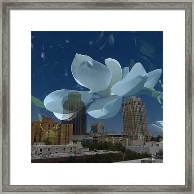 Blossom Rain 20 Framed Print by Georg Kickinger