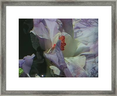 Blossom Rain 21 Framed Print by Georg Kickinger