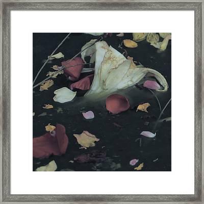 Blossom Rain 32 Framed Print by Georg Kickinger