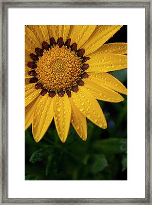 Blossom Framed Print by Ron White