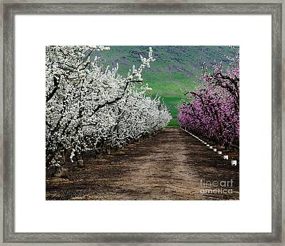 Blossom Standoff Framed Print by Terry Garvin