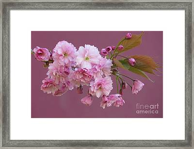 Blossom Standouts Framed Print by Frank Townsley