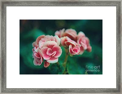 Framed Print featuring the photograph Blossom by Yew Kwang