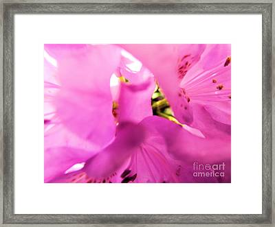 Framed Print featuring the photograph Blossoming Beauty by Robyn King