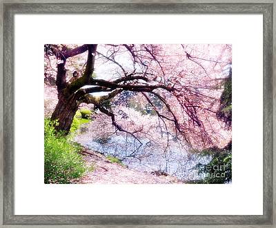 Blossoming Cherry Tree Touching Water Framed Print by Oleksiy Maksymenko