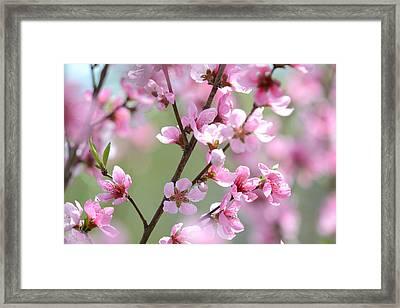Blossoming Hillside Framed Print by Melanie Moraga