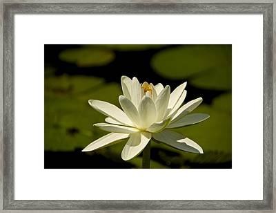 Blossoming Framed Print by Kathi Isserman