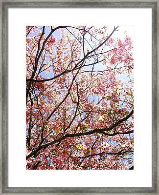 Blossoming Pink Framed Print by Robyn King
