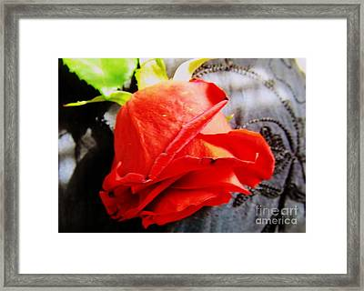 Framed Print featuring the photograph Blossoming Red by Robyn King