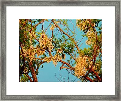 Blossoms 1 Framed Print by Stephanie Kendall