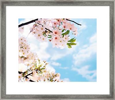 Blossoms Against Sky, Selective Focus Framed Print