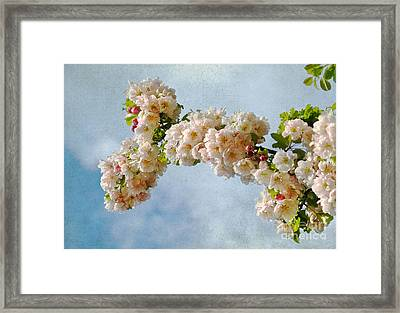 Blossoms And Clouds Framed Print