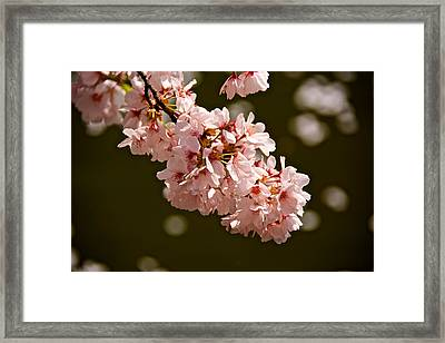 Blossoms And Petals Framed Print by Kathi Isserman