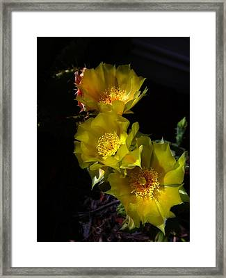 Blossoms At Dusk Framed Print by Nick Kloepping