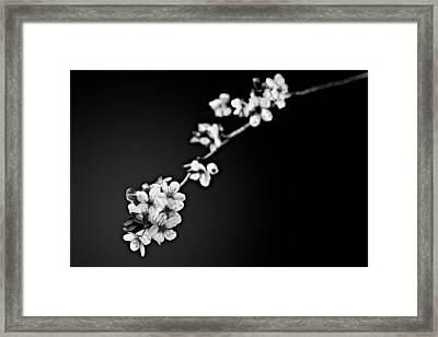 Framed Print featuring the photograph Blossoms In Black And White by Joshua Minso