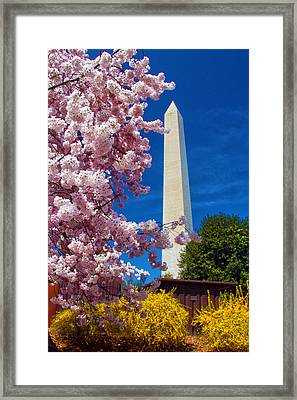 Blossoms Framed Print by Mitch Cat