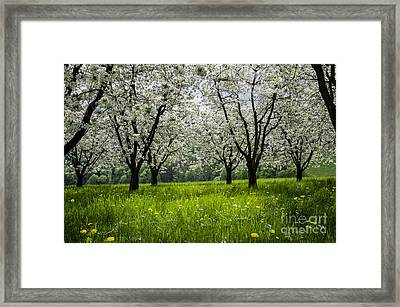Blossoms Time Framed Print by Bruno Santoro