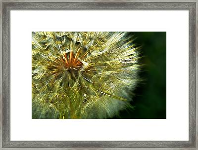 Blow Away Framed Print by Thomas Born